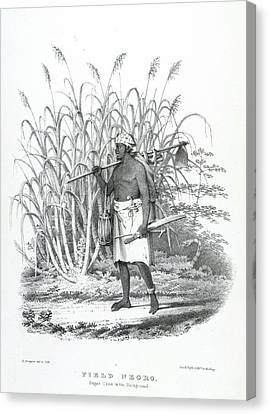 Field Negro Canvas Print by British Library