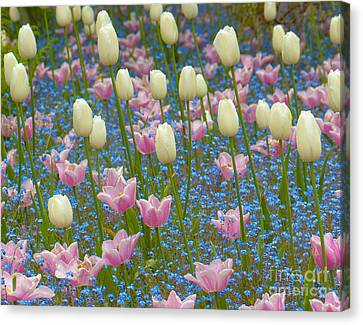 Field Of Blooms Canvas Print by Sarah Crites