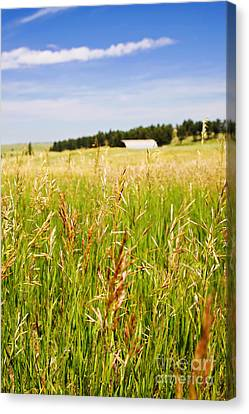 Canvas Print featuring the photograph Field Of Brome Grass With Barn by Lincoln Rogers