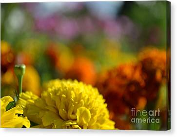 Canvas Print featuring the photograph Field Of Carnations by Scott Lyons