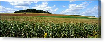 Field Of Corn With Tractor In Distance Canvas Print by Panoramic Images