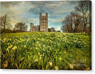 Field Of Daffodils Canvas Print by Adrian Evans