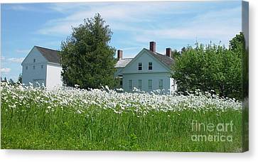 Canvas Print featuring the photograph Field Of Daisies 2 by Christopher Mace