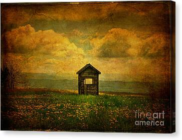 Field Of Dandelions Canvas Print by Lois Bryan