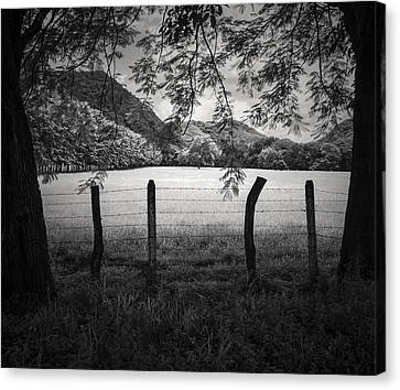 Canvas Print featuring the photograph Field Of Dreams by Antonio Jorge Nunes