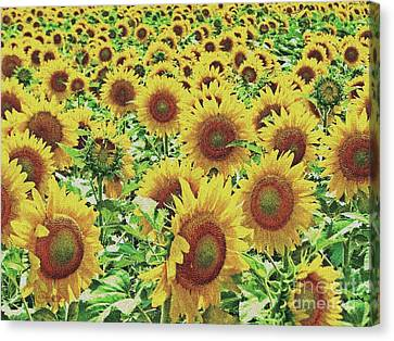 Field Of Dreams Canvas Print by Robert ONeil