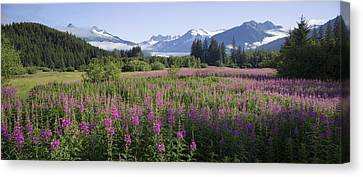 Field Of Fireweed With Coast Mountains Canvas Print