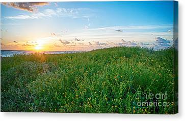 Field Of Flowers At Sunrise  Canvas Print by Tammy Smith