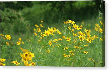 Field Of Yellow Wild Flowers   # Canvas Print