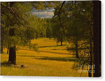 Field Of Flowers Canvas Print by Rod Wiens