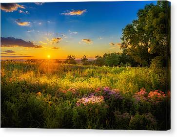Field Of Flowers Sunset Canvas Print by Mark Goodman
