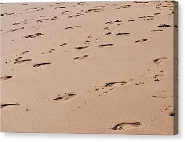 Field Of Footprints Canvas Print by Dan  Grover