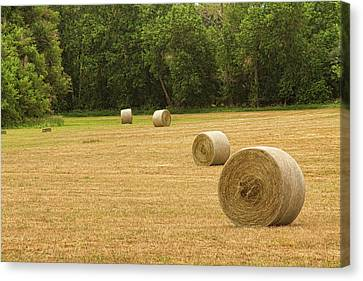 Field Of Freshly Baled Round Hay Bales Canvas Print by James BO  Insogna