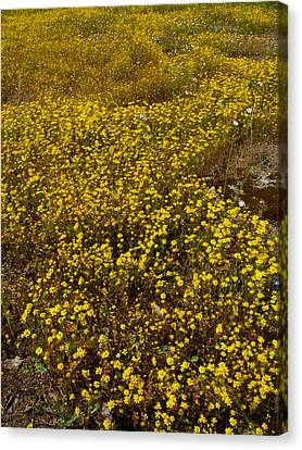 Field Of Goldfields In Park Sierra-ca Canvas Print by Ruth Hager