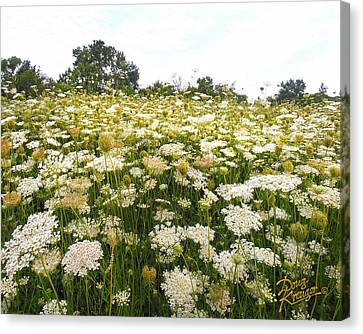 Field Of Lace Canvas Print by Doug Kreuger