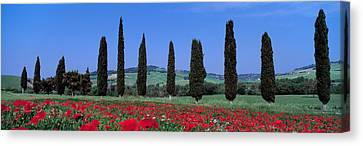 Field Of Poppies And Cypresses In A Canvas Print