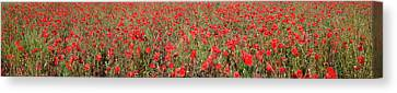 Field Of Poppies In Bloom Canvas Print