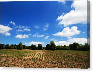 Field Of Potatoes, Near Inistioge Canvas Print by Panoramic Images