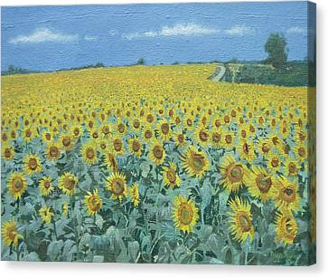 Field Of Sunflowers, 2002 Oil On Canvas Canvas Print