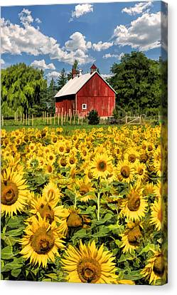 Field Of Sunflowers Canvas Print by Christopher Arndt