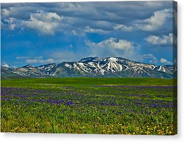Canvas Print featuring the photograph Field Of Wildflowers by Don Schwartz