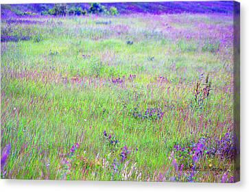 Field Of Wildflowers Canvas Print by Rosemarie E Seppala