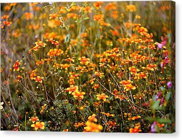 Field Of Wildflowers Canvas Print