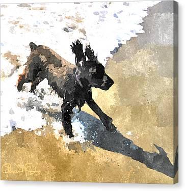 Field Spaniel Joy Canvas Print by Susan Molnar