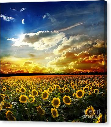Field With Sunflowers Canvas Print by Boon Mee