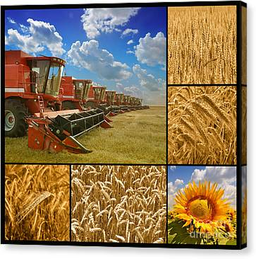 Fields And Grain Collage Canvas Print by Boon Mee