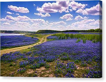 Fields Of Blue Canvas Print by Chuck Underwood