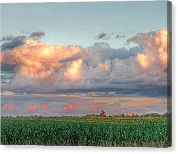 Fields Of Corn Canvas Print by Heather Allen