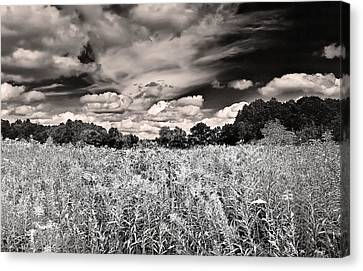 Canvas Print featuring the photograph Fields Of Gold And Clouds by Mitchell R Grosky
