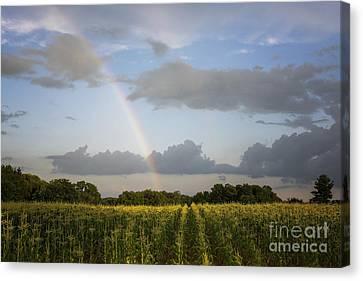 Fields Of Gold Canvas Print by Dan Hefle