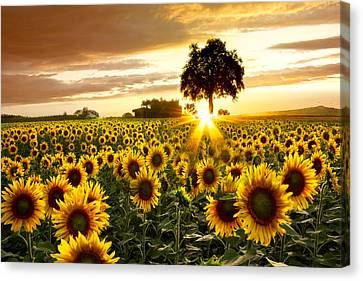 Garden Flowers Canvas Print - Fields Of Gold by Debra and Dave Vanderlaan