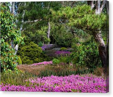 Canvas Print featuring the photograph Fields Of Heather by Jordan Blackstone
