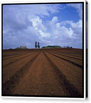 Fields Of Hod Hasharon Canvas Print by Dubi Roman
