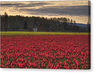 Fields Of Tulips Canvas Print by Mark Kiver