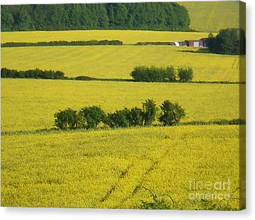 Fields Of Yellow Canvas Print by Ann Fellows