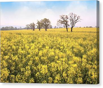 Fields Of Yellow Canvas Print by Ron Harpham