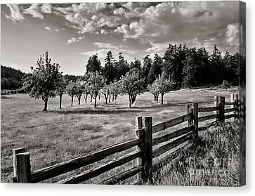 Fields Over Yonder Canvas Print