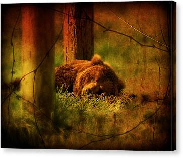 Canvas Print featuring the photograph Fiercely Tired by Micki Findlay