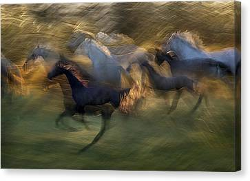 Fiery Gallop Canvas Print by Milan Malovrh