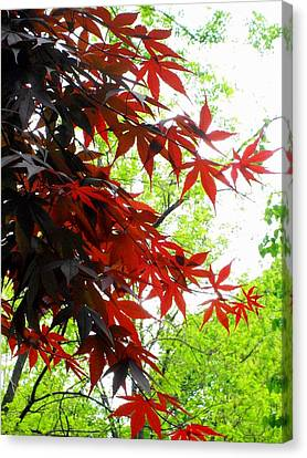 'fiery Maple' Canvas Print