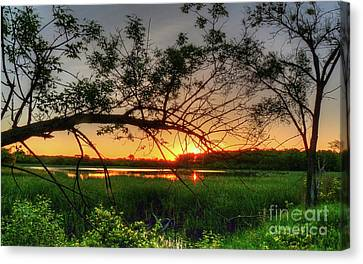 Fiery Swamp Sunset Canvas Print