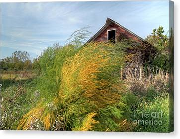 Fiery Weed And Barn Canvas Print