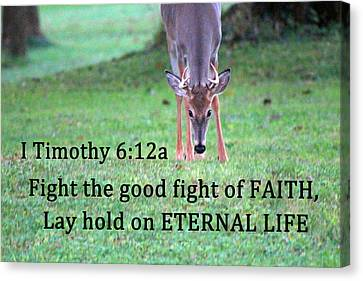 Fight Of Faith Canvas Print by Lorna Rogers Photography