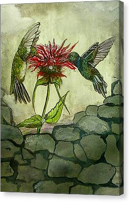 Fight Of The Hummingbirds Canvas Print by Alexandria Weaselwise Busen
