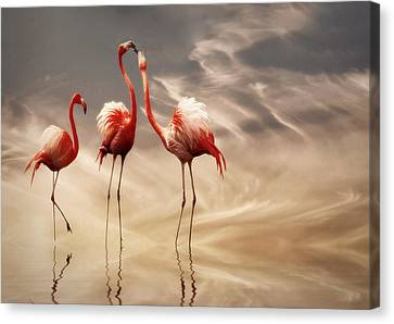 Pairs Canvas Print - Fighting ... by Anna Cseresnjes