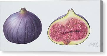 Figs Canvas Print by Margaret Ann Eden